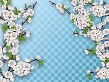 Ensemble de branches de floraison d'arbre fruitier de ressort Image libre de droits