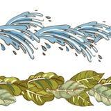 Ensemble de brosses sans couture un pulvérisateur de l'eau Feuilles de bouleau et de chêne Photos libres de droits