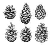 Ensemble de cône de pin Illustration tirée par la main botanique de vecteur isolat Photos stock