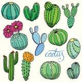 Ensemble de cactus tirés par la main d'isolement Images libres de droits