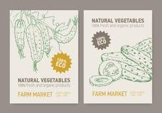 Ensemble de calibres d'insecte ou d'affiche avec des concombres coupés en tranches et cultivés sur la vigne Légumes organiques fr illustration de vecteur