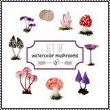 Ensemble de champignons d'aquarelle Photo libre de droits