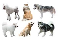 Ensemble de chiens au-dessus de blanc photos libres de droits