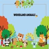 Ensemble de clipart (images graphiques) d'animaux de région boisée Photographie stock libre de droits