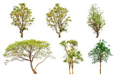 Ensemble de collection d'arbre d'isolement sur le fond blanc image stock