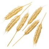 Ensemble de collection d'oreilles de blé d'isolement sur le fond blanc 8 Image libre de droits