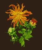 Ensemble de collection de schéma tiré par la main fleurs dessinant à la main sur le fond foncé Photos stock