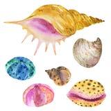 Ensemble de coquillages d'aquarelle Coquillages, coquilles, coraux, pierres illustration libre de droits