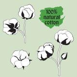 Symbole De Fleur De Coton Stock Illustrations Vecteurs Clipart