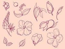 Ensemble de croquis et de ligne griffonnage Treize éléments Fleurs, bourgeon Images stock