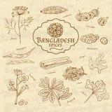 Ensemble de cuisines d'épices et d'herbes du Bangladesh dessus illustration libre de droits