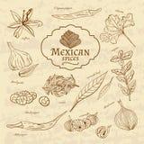 Ensemble de cuisines d'épices et d'herbes du monde illustration de vecteur