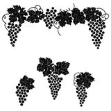 Ensemble de décor d'élément d'ornement de raisin de vigne Photo stock