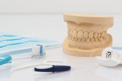 Ensemble de dents fausses avec des outils de nettoyage Images libres de droits