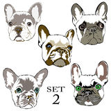 Ensemble de dessin de main de bouledogue de Logo French Images libres de droits