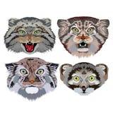 Ensemble de dessin de main de portrait de manul d'Otocolobus de chat de Pallas Photographie stock libre de droits