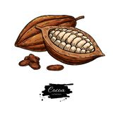 Ensemble de dessin de superfood de vecteur de cacao Croquis sain organique de nourriture Illustration de Vecteur