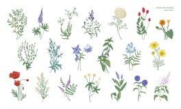Ensemble de dessins colorés détaillés réalistes des herbes sauvages de pré, usines fleurissantes herbacées, belle floraison Images libres de droits