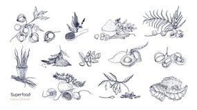 Ensemble de dessins détaillés des superfoods Fruits, baies, graines, cultures de racines, feuilles et poudre dessinés avec des co illustration stock