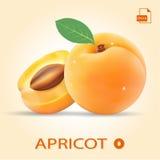 Ensemble de deux abricots frais avec la feuille Photos libres de droits