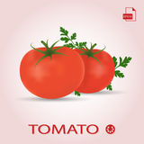 Ensemble de deux tomates mûres fraîches avec des feuilles Image libre de droits