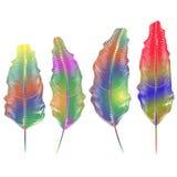 Ensemble de différentes plumes colorées illustration de vecteur