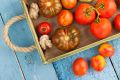 Ensemble de différentes sortes de tomates Photographie stock libre de droits