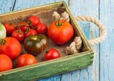 Ensemble de différentes sortes de tomates image libre de droits