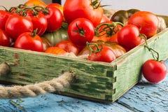 Ensemble de différentes sortes de tomates image stock