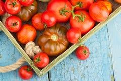 Ensemble de différentes sortes de tomates photo stock