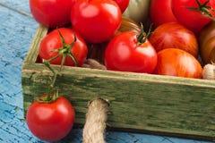 Ensemble de différentes sortes de tomates rouges photos libres de droits