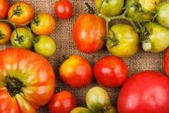 Ensemble de différentes sortes de tomates mûres dans le plateau en bois Photos libres de droits