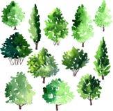 Ensemble de différents arbres à feuilles caduques Photos libres de droits