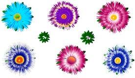 Ensemble de différents asters colorés avec des bourgeons Photographie stock