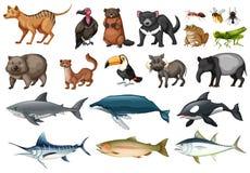 Ensemble de différents types d'animaux sauvages Images libres de droits