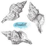 Ensemble de diverses coquilles de mer Photographie stock