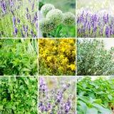 Ensemble de diverses plantes et herbes Image stock
