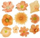 Ensemble de dix fleurs oranges sur le blanc Photographie stock