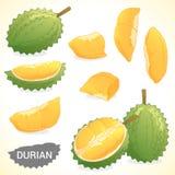 Ensemble de durian dans le divers format de styles Image libre de droits
