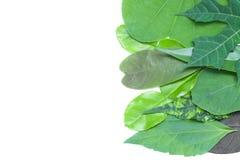 Ensemble de feuille verte sur le fond blanc Photographie stock