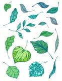 Ensemble de feuilles Image libre de droits