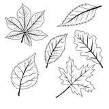 Ensemble de feuilles Photos stock