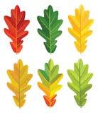 Ensemble de feuilles de chêne Illustration de vecteur Photos stock