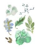 Ensemble de feuilles d'aquarelle Image vectorisée avec l'aquarelle Photographie stock