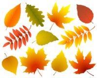 Ensemble de feuilles d'automne d'isolement colorées Image libre de droits