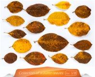 Ensemble de feuilles d'automne sur le fond blanc Une collection de feuilles brunes vivantes de jaune Usines sur le blanc d'isolem Image stock