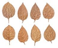 Ensemble de feuilles d'or d'isolement sur le fond blanc Usines peintes à la main photographie stock