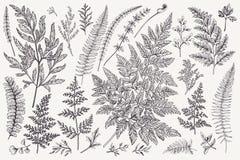 Ensemble de feuilles de fougère Photo libre de droits