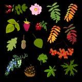 Ensemble de feuilles et de barries, illustration de vecteur Photo libre de droits
