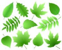 Ensemble de feuilles et de branches de vert Photo libre de droits